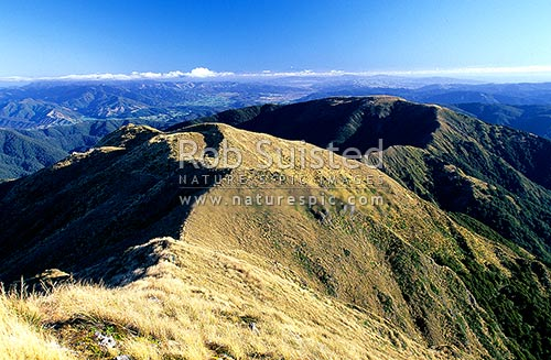 Quion Ridge, the Hutt Valley and Wellington from Mount (Mt) Alpha (1361m). Kaikoura Mountains in distance!, Tararua Forest Park, Upper Hutt District, Wellington Region, New Zealand (NZ) stock photo.
