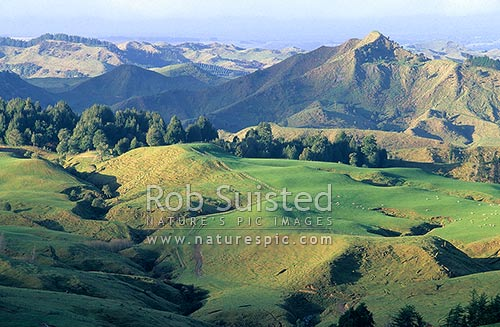 Evening light over Raetihi farmland, Raetihi, Ruapehu District, Manawatu-Wanganui Region, New Zealand (NZ) stock photo.