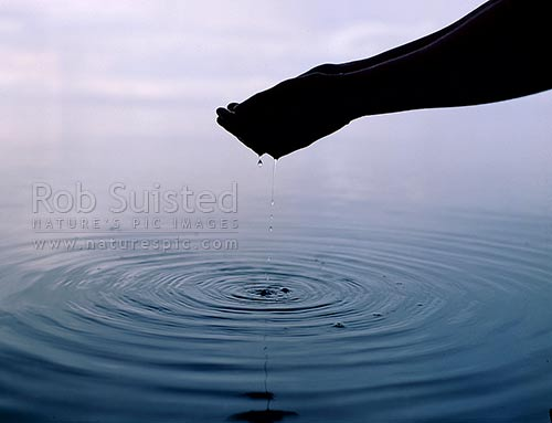 Hands dripping pure clean water into pond; water rings spreading outwards, New Zealand (NZ) stock photo.