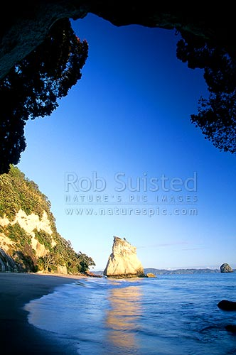 Looking through Cathedral cave to Cathedral Cove from Mares Leg Cove, early morning with Pohutukawa trees above. Hahei, Coromandel Peninsula, Thames-Coromandel District, Waikato Region, New Zealand (NZ) stock photo.