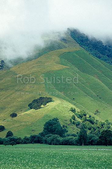 Misty farmland in the Rai Valley, Marlborough, Marlborough District, Marlborough Region, New Zealand (NZ) stock photo.