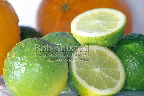 Limes and oranges. Lime is cut in half, New Zealand (NZ) stock photo.
