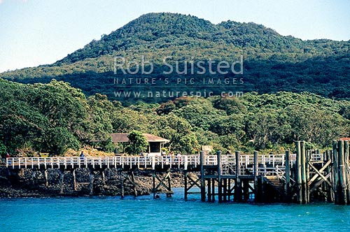 Wharf on Rangitoto Island with visitor centre and volcanic cone beyond (260masl), Rangitoto Island, Auckland City District, Auckland Region, New Zealand (NZ) stock photo.
