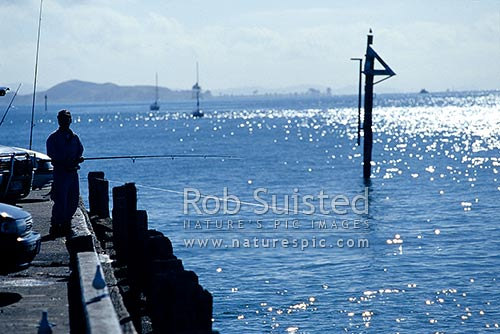 Fisherman fishing on Devonport wharf, Devonport, North Shore City District, Auckland Region, New Zealand (NZ) stock photo.
