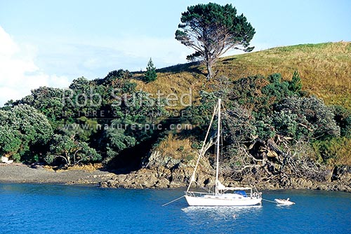 Yacht moored in Matiatia Bay, Waiheke Island, Auckland City District, Auckland Region, New Zealand (NZ) stock photo.