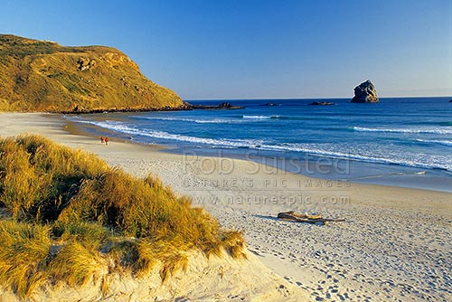 People walking on Sandfly Bay beach, Otago Peninsula, Dunedin City District, Otago Region, New Zealand (NZ) stock photo.