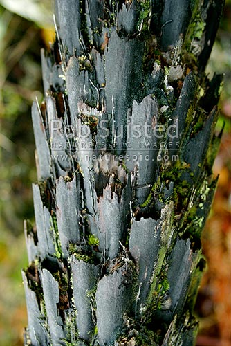 Bark texture of a tree fern, New Zealand (NZ) stock photo.