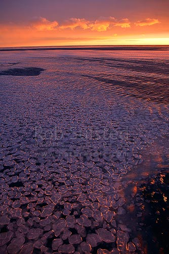 Setting sun lighting pancake ice as the sea surface begins to freeze. Terra Nova Bay, Ross Sea, Antarctica District, Antarctica Region, Antarctica stock photo.