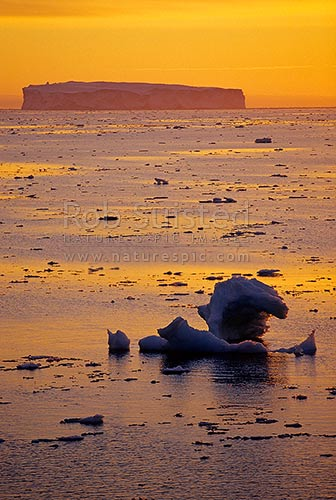 Antarctic sunrise - sun rising over pack ice and tabular ice bergs. 66 degrees South. 66º 2' S 141º34' E, Open southern ocean, Commonwealth Bay, George V Land, Antarctica District, Antarctica Region, Antarctica stock photo.