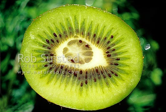 Kiwifruit with a double core (Actinidia deliciosa 'Hayward'), New Zealand (NZ) stock photo.