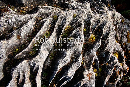Weathered limestone rock with interesting eroded texture and patterns. Moss, Te Anau, New Zealand (NZ) stock photo.