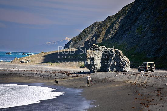 A man exercising dog on a remote Wellington South Coast beach. 4WD, 4x4, four wheel drive vehicle. Snowy Kaikoura Ranges beyond, Wellington, Wellington City District, Wellington Region, New Zealand (NZ) stock photo.
