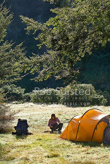 Tramper making breakfast at tent camp in forest clearing on a dew covered still autumn morning, Tararua Forest Park, Masterton District, Wellington Region, New Zealand (NZ) stock photo.