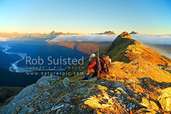 Deer hunter glassing with binoculars along the Thomas Range in alpine tussock and afternoon mist, above the Haast River valley, Haast, Westland District, West Coast Region, New Zealand (NZ) stock photo.