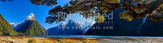 Mitre Peak in Milford Sound. Mitre Peak left (1683m), The Lion (1302m) and Mt Pembroke (2015m) centre. Panorama under beech trees, Milford Sound, Fiordland National Park, Southland District, Southland Region, New Zealand (NZ) stock photo.
