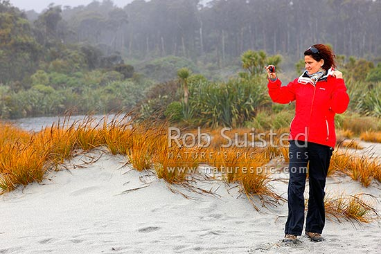 Woman tourist visitor photographing coastal forest at Ship Creek, with native pingao (Desmoschoenus spiralis) grass and forest behind, Haast, Westland District, West Coast Region, New Zealand (NZ) stock photo.