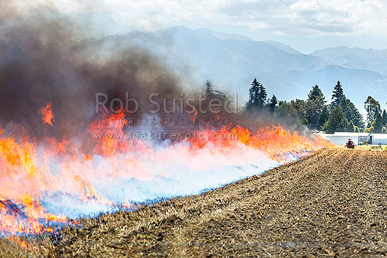 Wheat stubble burning off fire being lit post harvest by farmers travelling on quab bike ATV, to clear paddock for next crop rotation, Methven, Ashburton District, Canterbury Region, New Zealand (NZ) stock photo.