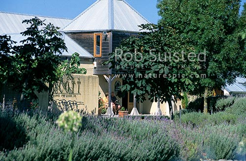 Allan Scott Winery, Marlborough, Marlborough District, Marlborough Region, New Zealand (NZ) stock photo.